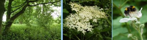 green under tree, cow parsley, bee (1)