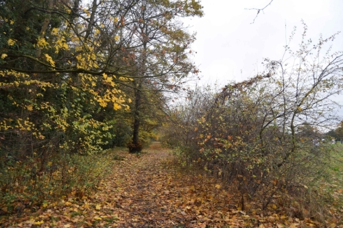 1-hedgerow-autumn