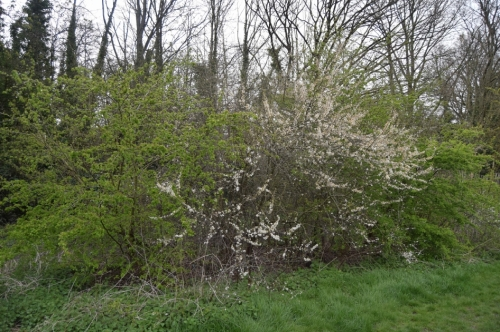 2-hedgerow-spring